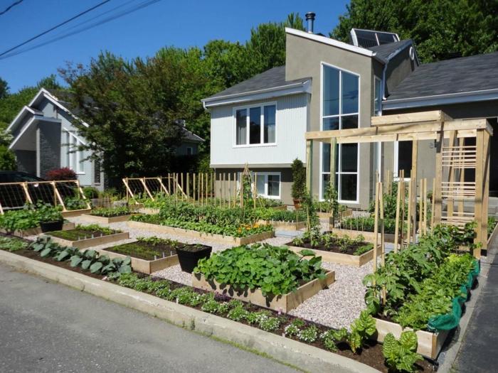 ordentliche Gemüse Beete - Vorgartengestaltung mit Kies - kleines Reihenhaus