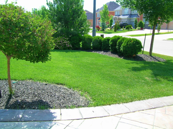 kleiner Vorgarten mit Rasen in so grüne Farbe, Zierstrauche und Bäume