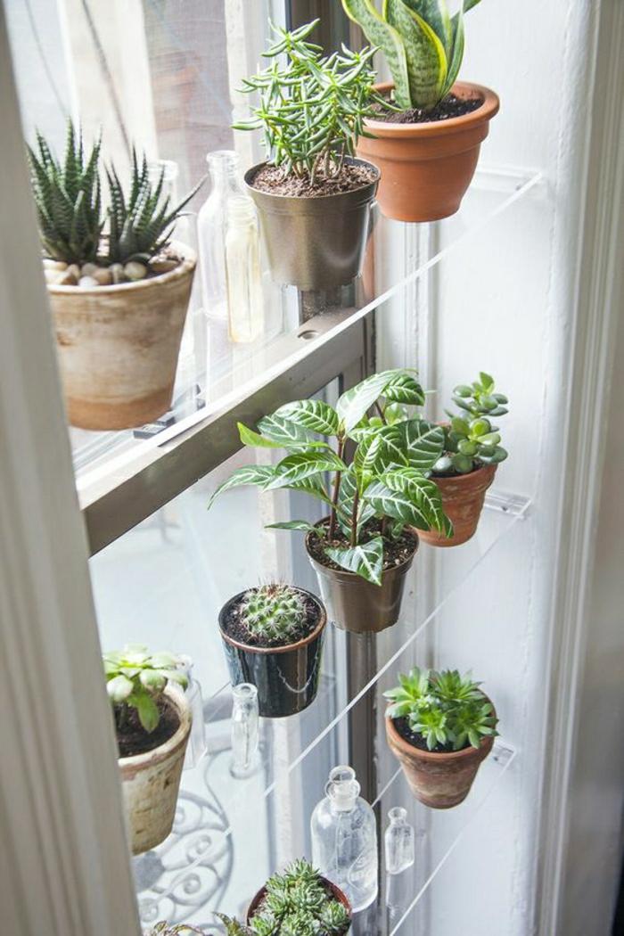 Wohnideen Wohnzimmer: Fensterdeko mit Sukkulenten und anderen Pflanzen auf einem Glasregal