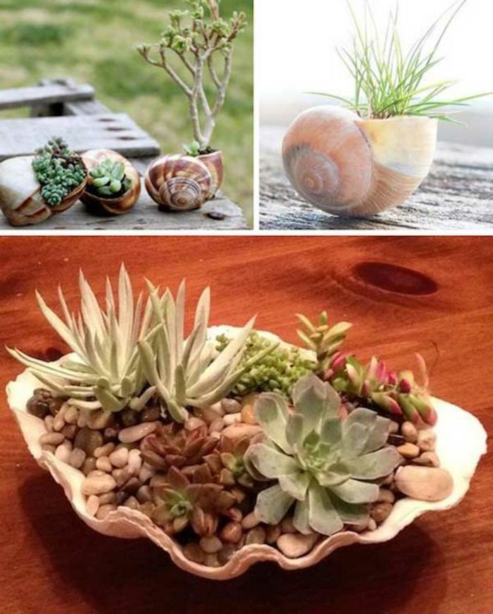 blumentöpfe verschönern tolle idee für ein minigarten muscheln als töpfe gestalten grass anpflanzen