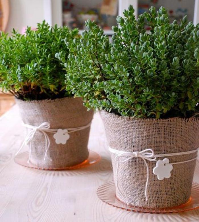 blumenkübel bepflanzen ideen bilder einfaches design für den blumentöpfen grüne pflanzen zu hause frische