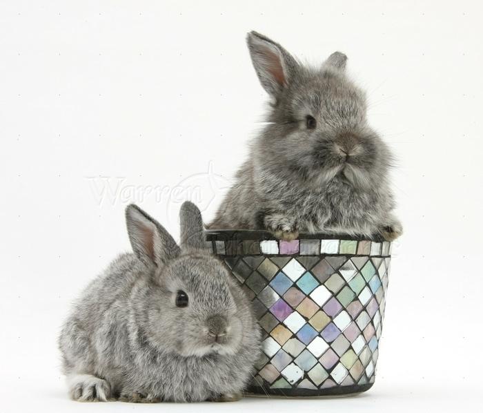 blumentopf keramik einmaliges blumentopf design gefällt den kleien hasen graue hasen design ideen für topf