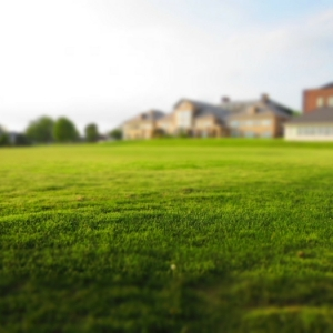 Ein englischer Rasen zum Träumen - Tipps zur Pflege