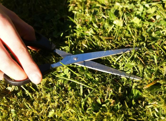 englischer Rasen - wie viel können Sie mit Schere erreichen