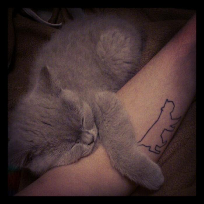 kleine katzen tätowierung - hier ist eine kleine, süße, schlafende, graue katze und eiene hand mit einem kleinen schwarzen katzen tattoo