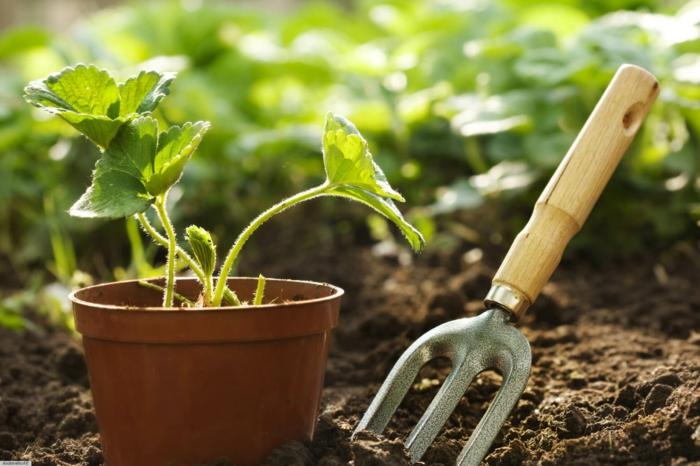Gartenbeete gestalten - eine winzige Pflanze im Blumentopf wie Setzling