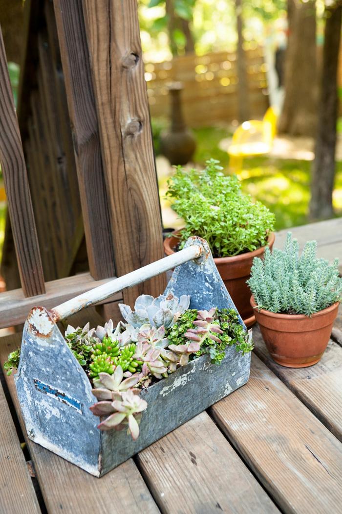 pflegeleichtes Beet - zwei Blumentöpfe und Werkzeugkasten voller Hauswurzen