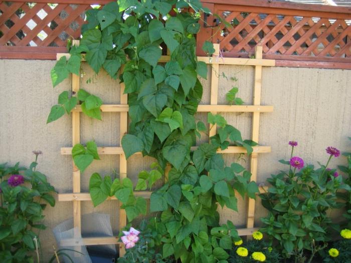 Kletterpflanzen an der Wand, lila und gelbe Blumen - pflegeleichte Gärten