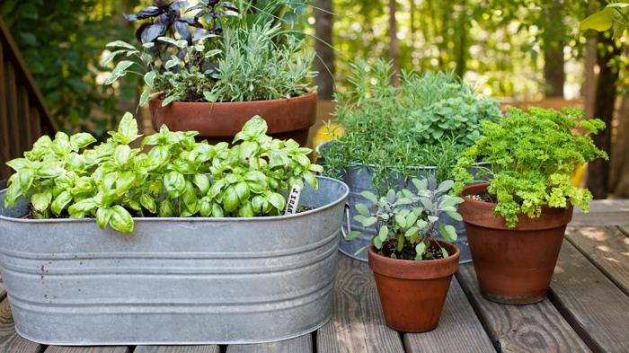 DIY Blumentöpfe mit grünen Pflanzen auf einem Tisch aus Holz - pflegeleichtes Beet
