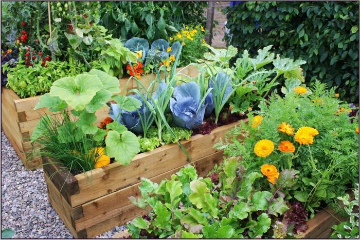 Gartenbeete gestalten - Blumen und Gemüse in einem Beet fröhliche Farben