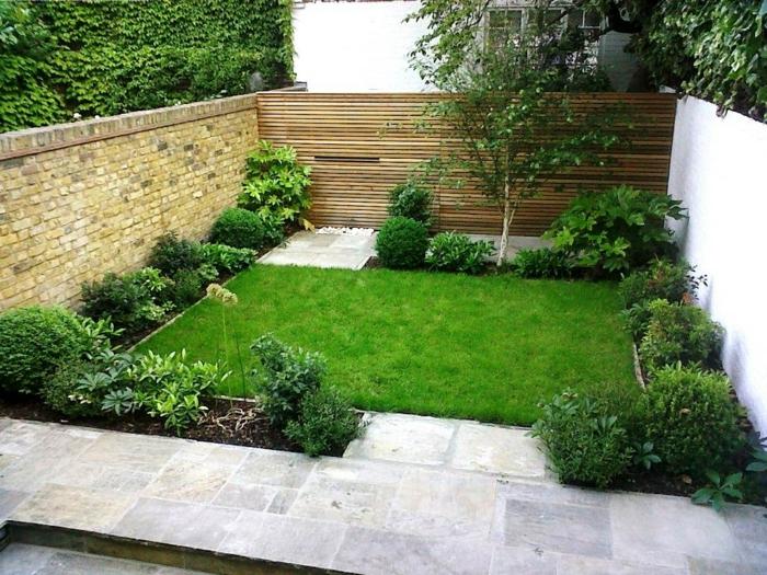 grüner englischer Rasen eine kleine Birke - pflegeleichte Gartenpflanzen