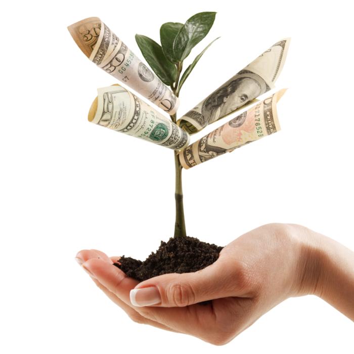 Aus Geldscheinen einen Baum falten, kreative Ideen für Geldgeschenke, leicht und schnell Geschenke basteln