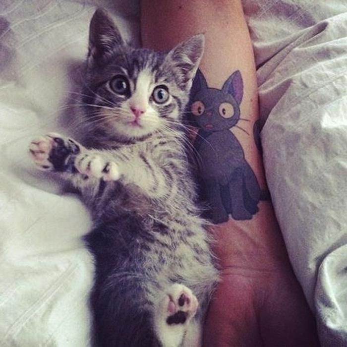 hier ist ein hand mit einem katzen tattoo und eine kleine süße graue katze mit grünen augen und langen weißen vibrissen