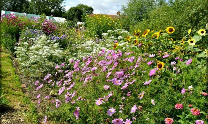 so viele schöne Blumen auf einem Platz pflegeleicht Gartenbeete gestalten
