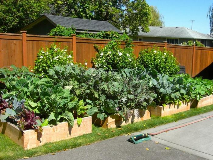 Gartenbeete gestalten hinter hölzernen Zaun weiße Blumen und Gemüse