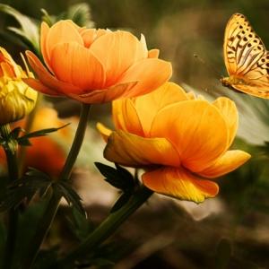 Pflanzkübel - eine Alternative für die Bepflanzung im Innen- und Außenbereich
