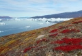 Die Arktis – die weiße Wunderwelt!