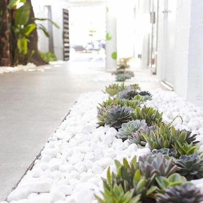 Hauswurzen und weiße Steine interessante Kombination - moderner Vorgarten