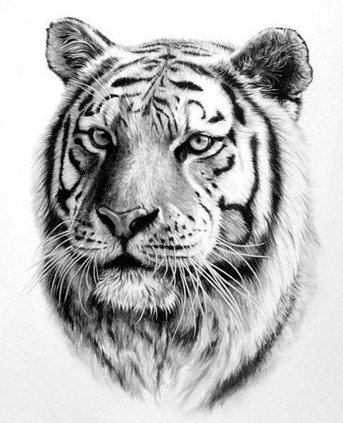 zeichnung in schwarz und weiß, tigerkopf, vorlage