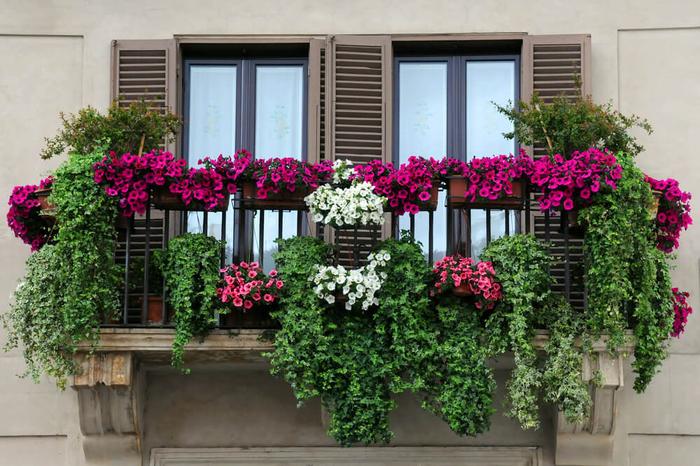 den Balkon wunderschön bepflanzen, grüne Pflanzen und violette Petunien