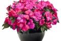 Balkonpflanzen auswählen und pflegen: praktische Tipps