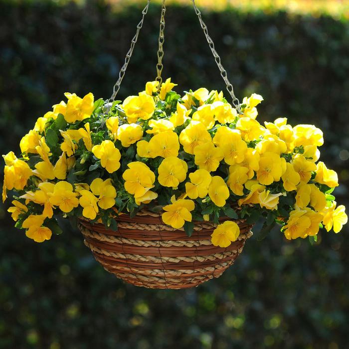 Korb mit gelben Veilchen, tolle Ideen für den Garden oder den Balkon, mit Blumen dekorieren