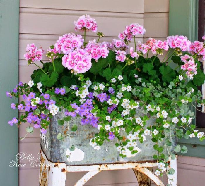 das Zuhause erfrischen- tolle Tipps und Ideen, rosa Geranie, Klassiker bei den Balkonpflanzen