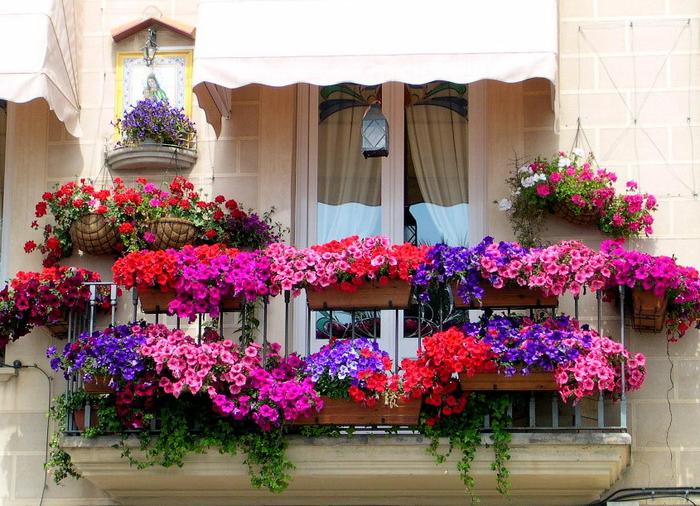wunderschöne Terrasse mit vielen Blumen, bunte Petunien sorgen für einen romantischen Look