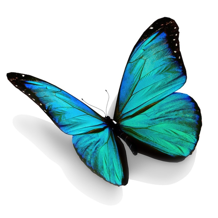 hier ist blauer und sehr schön aussehender märchenhafter blauer schmetterling - eine tolle idee für eine tätowierung mit einem blauen schmetterling