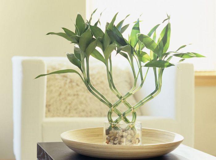 feng shui, weißer sessel, grüne pflanze, steinchen, glasvase, schale, dekoration
