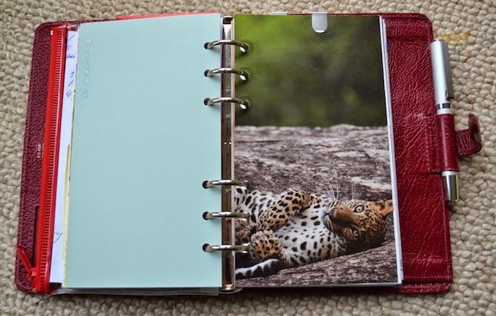 ein Tiger, der liegt aus einem alten Kalender ausgeschnitten in rotem Notizbuch Filofax Ideen
