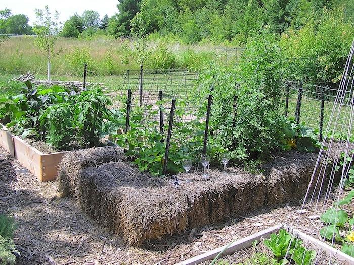 Hochbeet anlegen und mit Stroh bedecken, Gemüse pflanzen, das Kletterpflanze ist