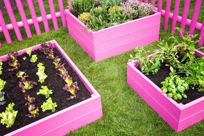 Hochbeet anlegen - drei rosa Hochbeete, voller verschiedene Pflanzen - Gemüse, Kräuter und Blumen