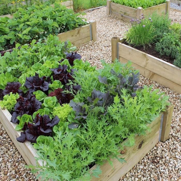 grüne und schwarze Pflanzen in einem Hochbeet anlegen aus Bretten gebaut