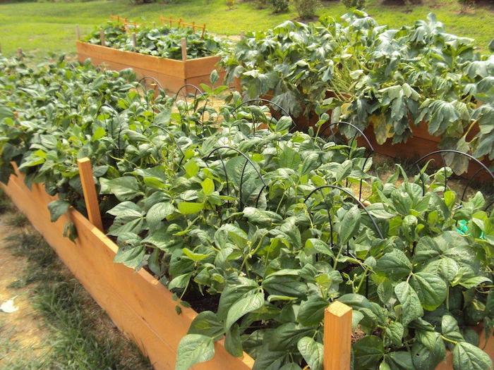 Gurken und Zucchini pflanzen - Hochbeet anlegen mit Draht zu Kletterpflanzen