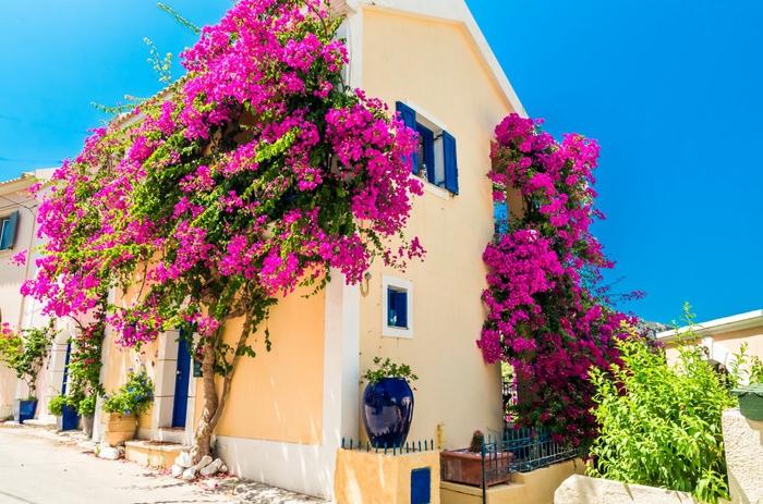 märchenhaftes griechisches Haus, Baum mit vielen violetten Blüten, Blumentöpfe vor dem Gebäude