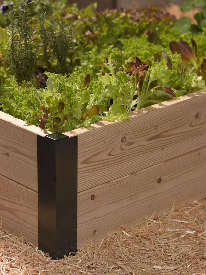 eine Ecke von grünen Pflanzen Hochbeet befüllen Sägemehl darum