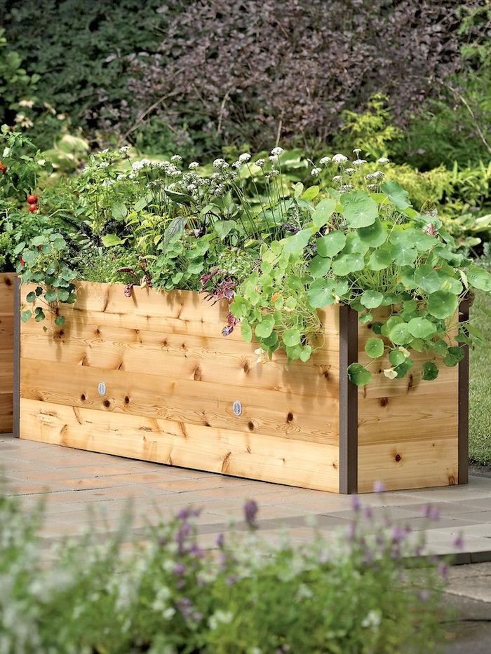 Hochbeet befüllen mit Pflanzen mit breiten Blätter als Sichtschutz nutzen