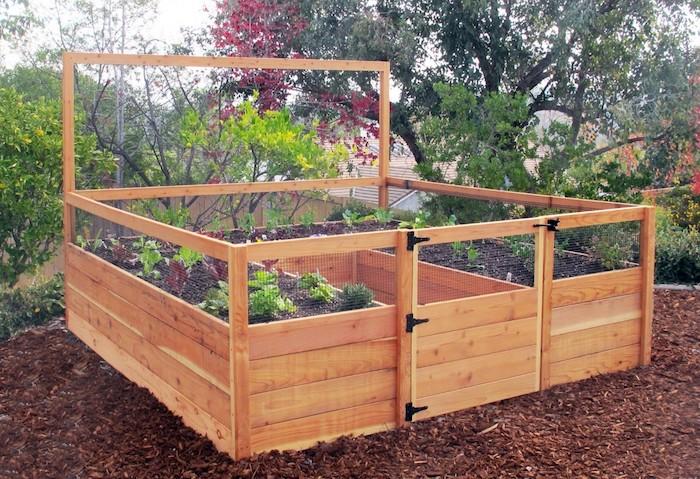 eine Konstruktion aus Bretten und Netz Hochbeet selber bauen mit Salat darin