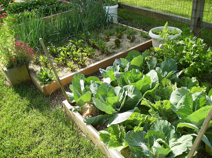 Hochbeet bepflanzen mit Kohl, Salat und Zwiebel - Gemüse zum Abendbrot