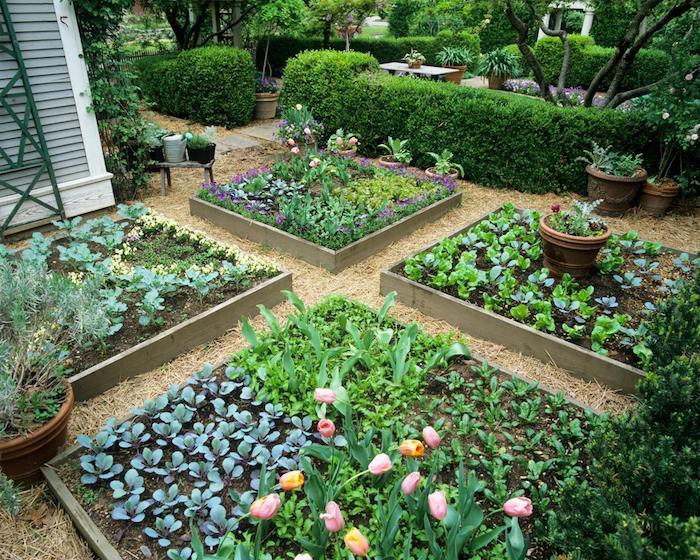 grünes Hochbeet mit Tulpen und andere Blumen die bald blühen - Hochbeet bepflanzen