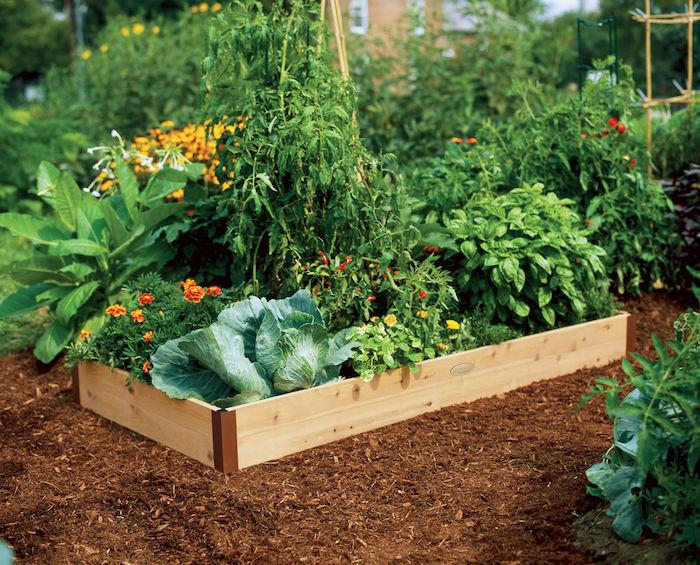 Hochbeet selber bauen - Kohl, Tomate und Blumen in einem Beet so praktisch