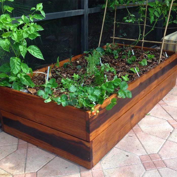 Hochbeet selber bauen kleine grüne Pflanzen und noch werden später wachsen