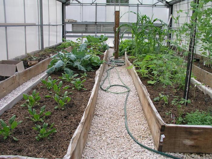 Hochbeete anlegen - ein Pfad aus Kies und Schläuchen winterliches Gemüse im Treibhaus