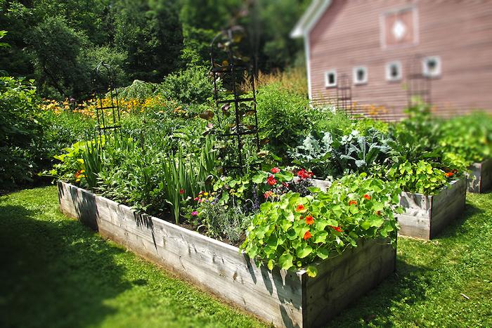 Hochbeete anlegen mit roten Blumen ein Konstruktion für Kletterpflanzen