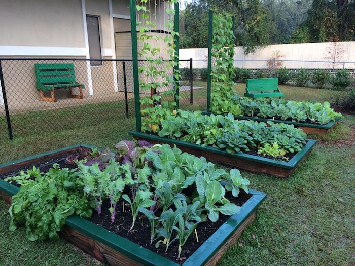 Kohl, Salat und andere grüne Gemüsepflanzen in drei Hochbeete anlegen