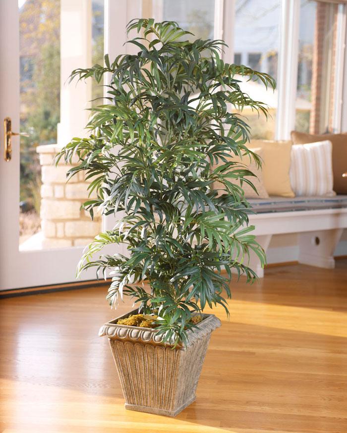 eine Palme in keramischen Blumentopf in der Mitte des Zimmers - Pflanzen, die wenig Licht brauchen