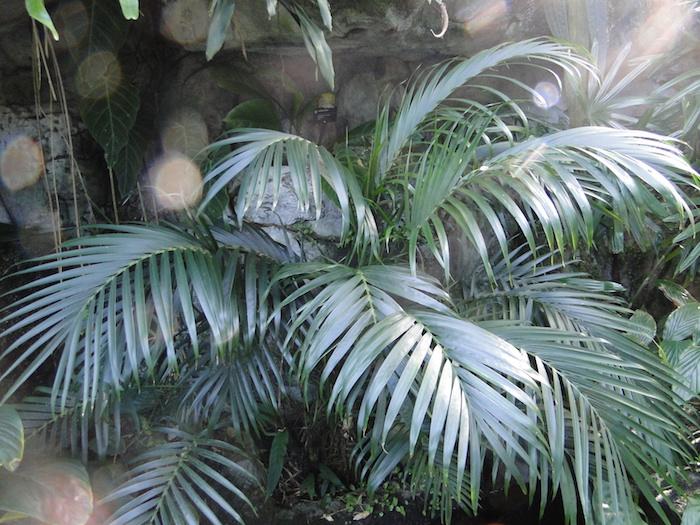 grüne Palme mit prächtigen Blätter, indirektes Sonnenlicht Pflanzen, die wenig Licht brauchen