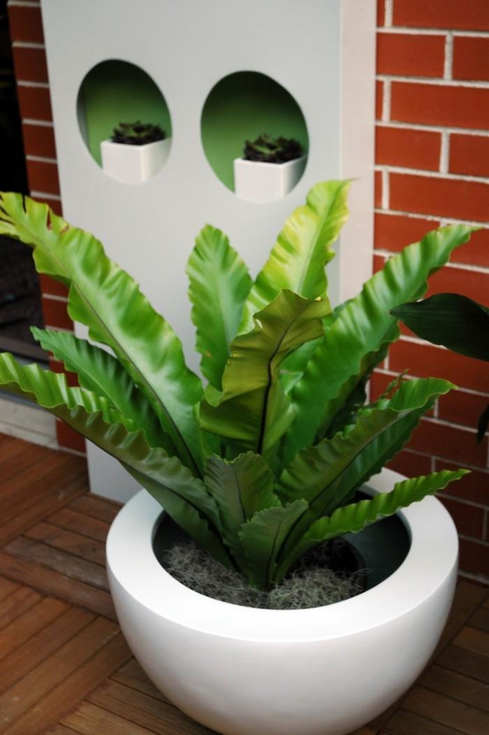 eine Komposition aus einigen Pflanzen, die wenig Licht brauchen Asplenium darunter