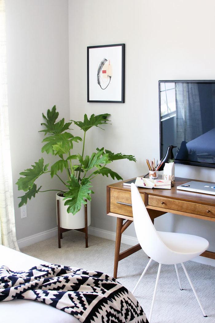 eine grüne Pflanze in der Ecke von Arbeitszimmer Pflanzen von dunklen Räume